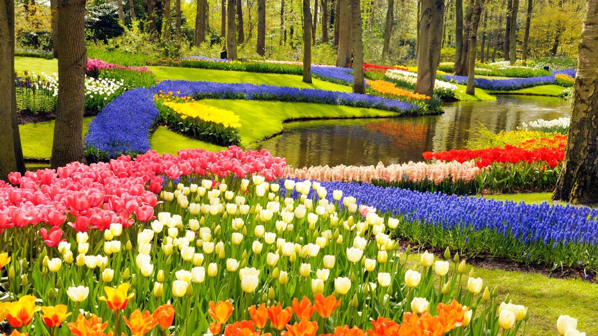 картинка красота весны окружающий мир восстановить